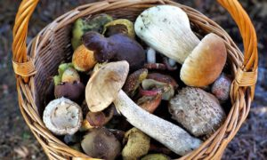 W lasach pojawiły się pierwsze tegoroczne grzyby! Są naprawdę okazałe
