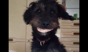 Pies ukradł protezę właściciela