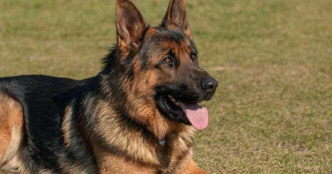 śmierć psa zakażonego koronawirusem 4