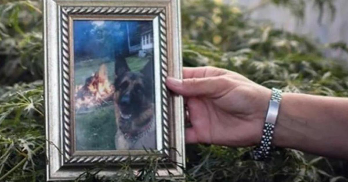śmierć psa zakażonego koronawirusem