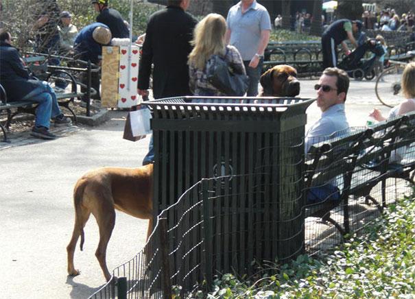 25 zabawnych zdjęć psów 26
