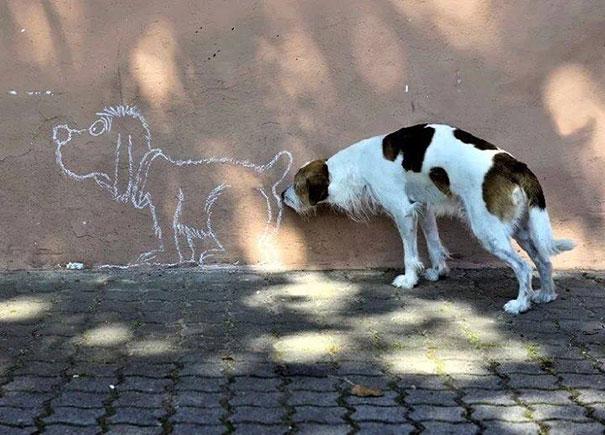 25 zabawnych zdjęć psów