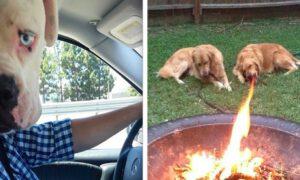 25 zabawnych zdjęć psów. Idealne podsumowanie obchodzonego dziś Dnia Psa