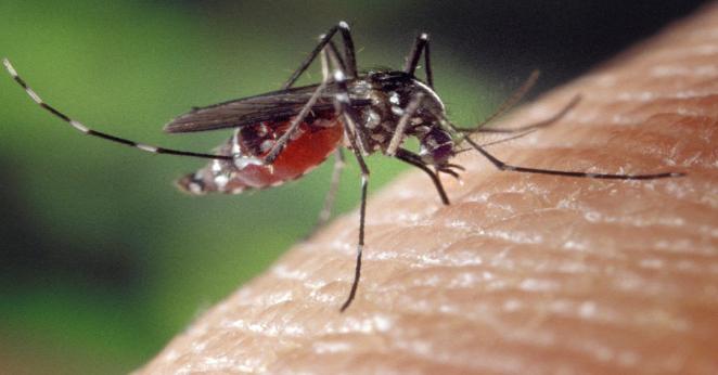 Zmarł po ugryzieniu przez komara