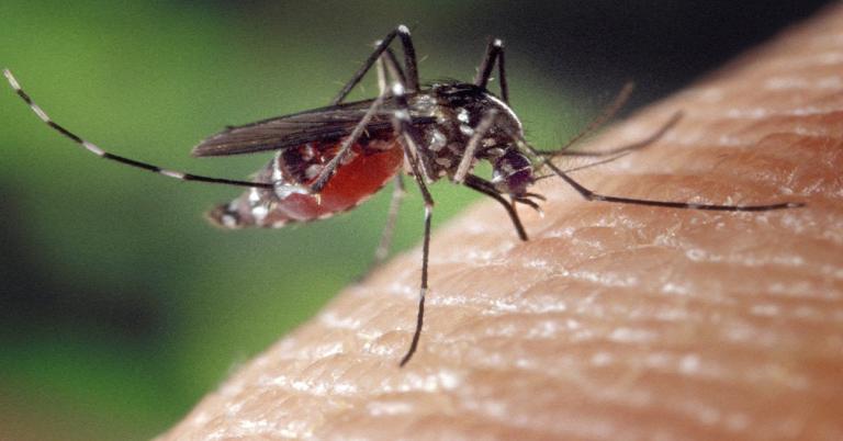 Czy komary przenoszą koronawirusa