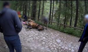 Koń padł z wycieńczenia w Tatrach. Woźnica i turyści i tak nie odpuszczają