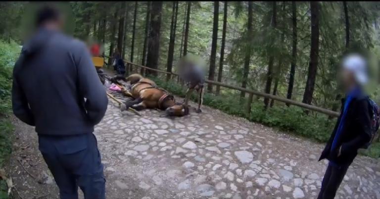 Koń padł z wycieńczenia