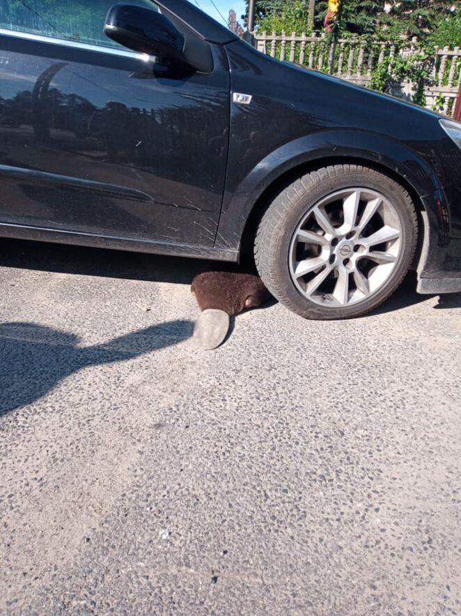 Niezwykły gość na parkingu w Łodzi