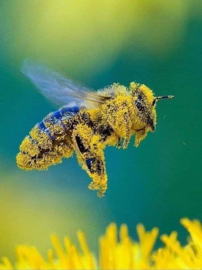 jad pszczeli zabija koronawirusa 2