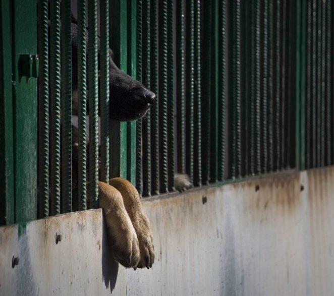 rekordowo wysoka kara za przemoc wobec zwierząt 2