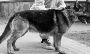 Śmierć psa zakażonego koronawirusem. To pierwszy taki przypadek na świecie