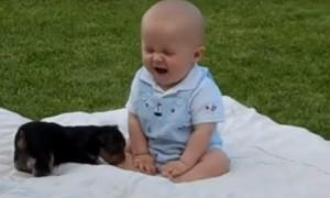"""York """"atakuje"""" dziecko! Trudno się nie uśmiechnąć, widząc to nagranie"""