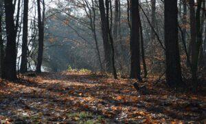 Przerażające grzyby w polskich lasach. Lasy Państwowe ostrzegają grzybiarzy
