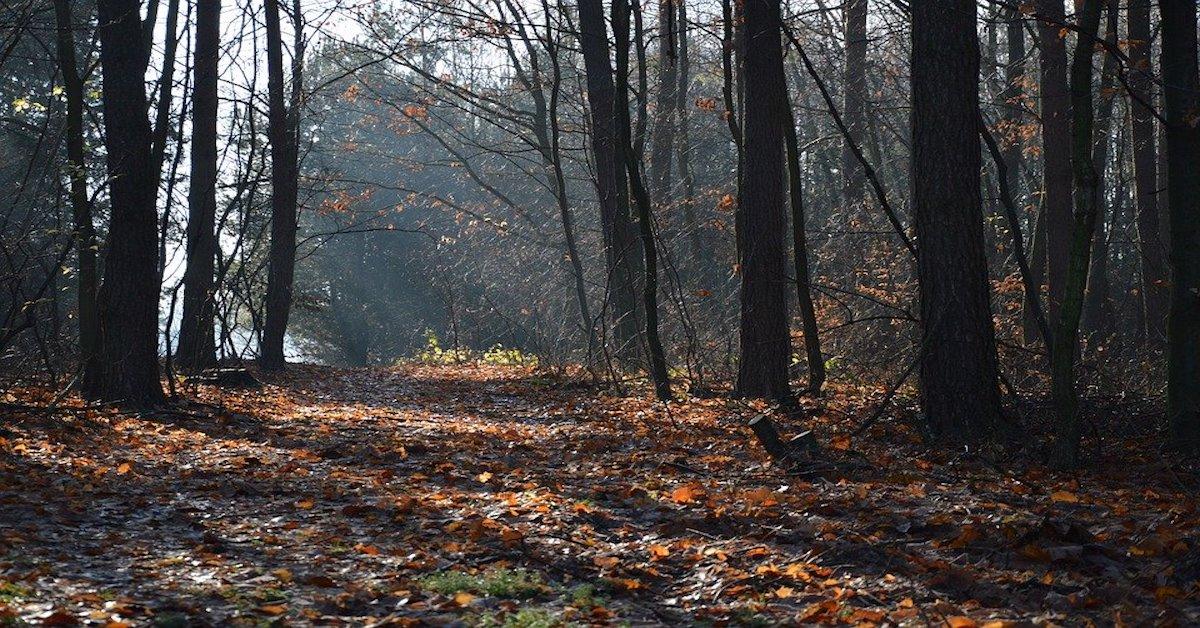 Przerażające grzyby w polskich lasach