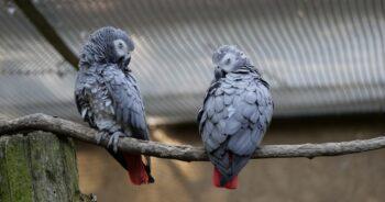 chamskie papugi obrażają zwiedzających