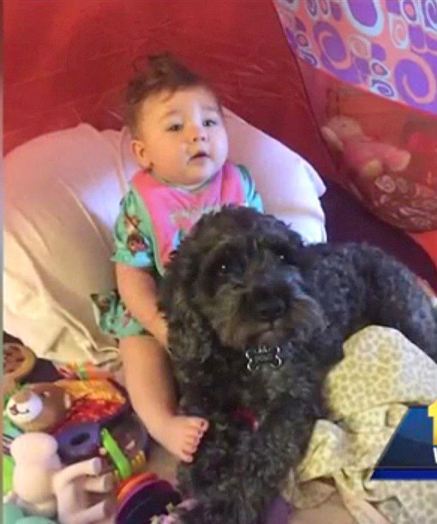 Pies zginął ratując dziecko