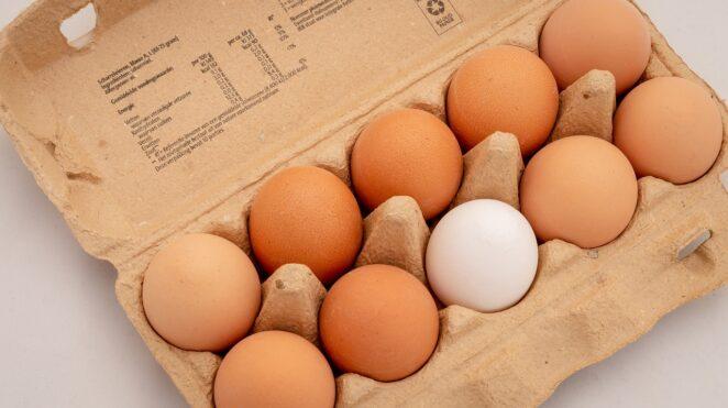 Salmonella na skorupkach jaj