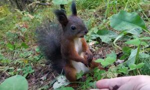 """Wiewiórka """"zawiesiła się"""" podczas jedzenia. Słodkie zwierzątko podbija Internet"""