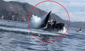 Kajakarki w paszczy wieloryba