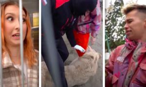 Polscy youtuberzy weszli do klatki z lwami