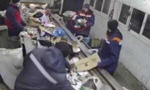 Kot znaleziony w śmieciach