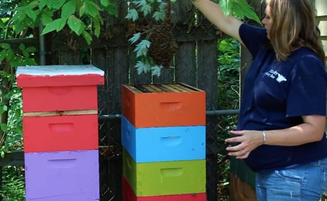 Ciężarna pozowała do zdjęć z rojem pszczół