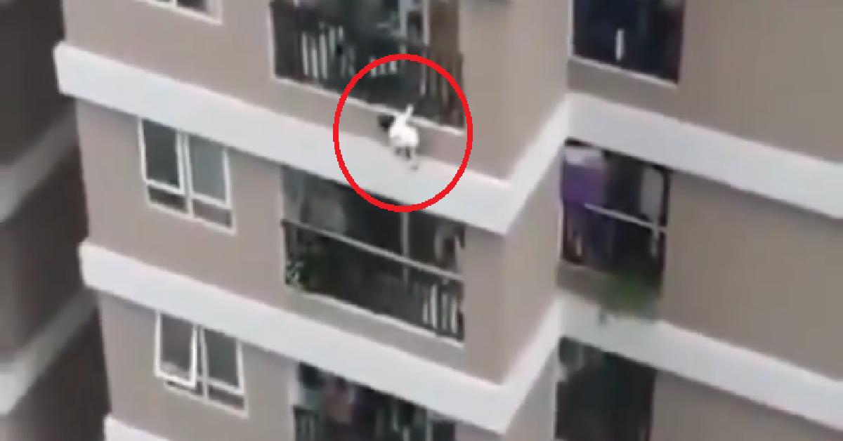 Dwulatka wypadła z 12. piętra
