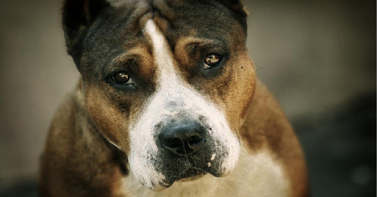 Mężczyzna gwałcił własnego psa