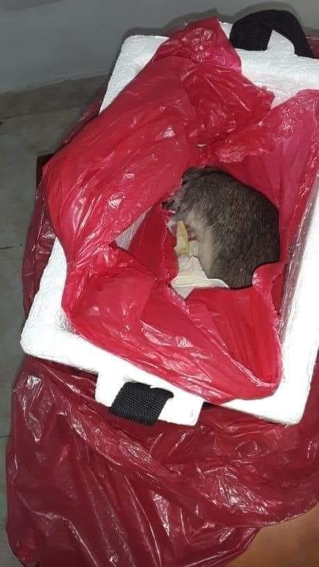 zamiast zwłok noworodka dostali szczura 2