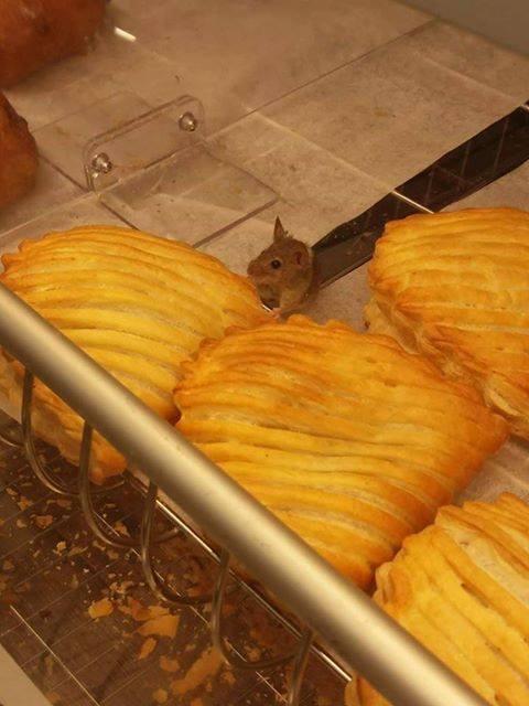 Mysz w Biedronce